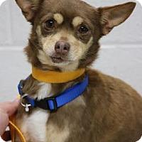 Adopt A Pet :: Hershey - Yucaipa, CA