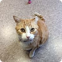 Adopt A Pet :: Frank - Byron Center, MI