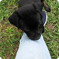 Adopt A Pet :: Ellen - Weeki Wachee, FL