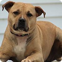 Adopt A Pet :: Emmy - Queenstown, MD