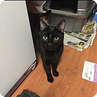 Adopt A Pet :: Travis - Wantagh, NY