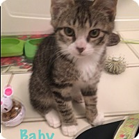Adopt A Pet :: Baby - Jackson, NJ