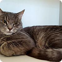 Adopt A Pet :: Phantom - Salisbury, MA