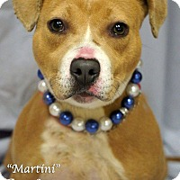 Adopt A Pet :: Martini - Newnan City, GA