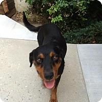 Adopt A Pet :: Bellina - Salt Lake City, UT