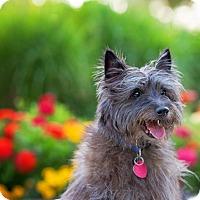 Adopt A Pet :: Bingo - Boise, ID