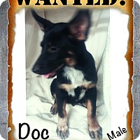 Adopt A Pet :: Doc-pending adoption - Manchester, CT
