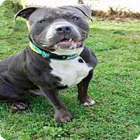 Adopt A Pet :: ROBO - Rockford, IL