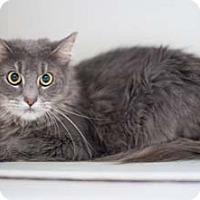 Adopt A Pet :: Zeus - Merrifield, VA