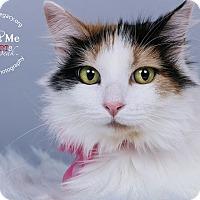 Adopt A Pet :: Sister - Cincinnati, OH
