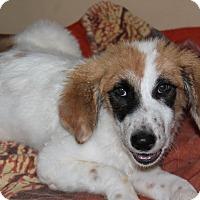 Adopt A Pet :: Bandit - Naperville, IL