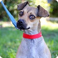 Adopt A Pet :: Marte - San Diego, CA