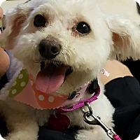 Adopt A Pet :: Katie - Troy, MI