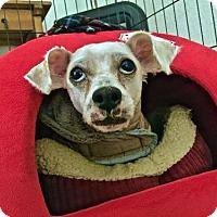 Adopt A Pet :: Billy Bob - Portland, OR