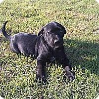 Adopt A Pet :: Gunther - Austin, AR