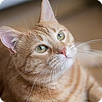 Adopt A Pet :: Tigger - Chicago, IL
