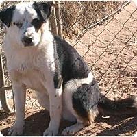 Adopt A Pet :: Petri - Anton, TX