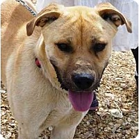 Adopt A Pet :: Cinco - YERINGTON, NV