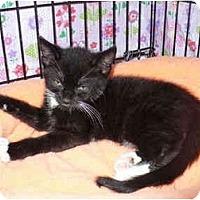Adopt A Pet :: Kristopher - Colmar, PA