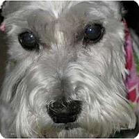 Adopt A Pet :: Watson - Seymour, CT