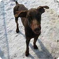Adopt A Pet :: Kenny--adopted! - New Richmond, OH