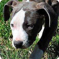 Adopt A Pet :: Maya - Mission Viejo, CA