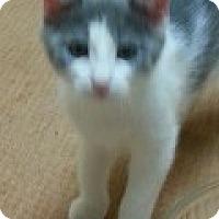 Adopt A Pet :: Ben - McHenry, IL