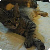Adopt A Pet :: Paisley - Springdale, AR