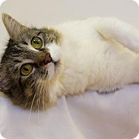 Adopt A Pet :: Catalina - Mission Viejo, CA