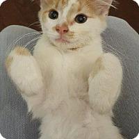 Adopt A Pet :: Panther - Aurora, CO