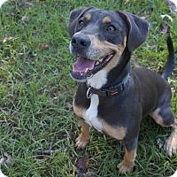 Adopt A Pet :: Ember - Ravenel, SC