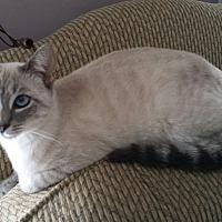 Adopt A Pet :: Aurora - Horsham, PA