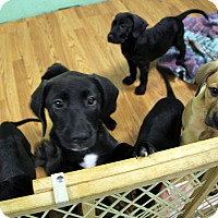 Adopt A Pet :: whinner - north myrtle beach, SC