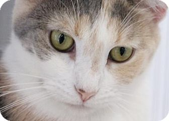 Calico Cat for adoption in Murfreesboro, North Carolina - Neely