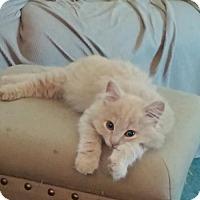 Adopt A Pet :: Donatello - Hastings, MN