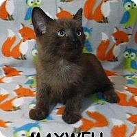 Adopt A Pet :: Maxwell - Batesville, AR