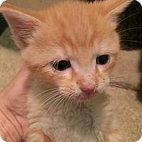 Adopt A Pet :: Stan - Herndon, VA