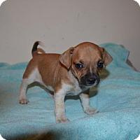Adopt A Pet :: Bashful - Winder, GA