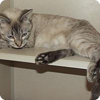 Adopt A Pet :: 20902 - Cheboygan, MI