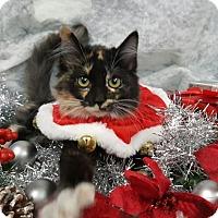 Adopt A Pet :: Snowball - Champaign, IL