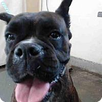 Adopt A Pet :: KAILA - Camarillo, CA