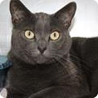 Adopt A Pet :: Reba - Columbia, SC