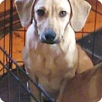 Adopt A Pet :: Ben - Newark, DE