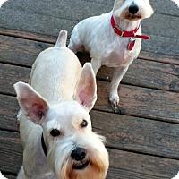 Adopt A Pet :: Cricket & Buddy-NEW PICS!! - Southeastern, KS
