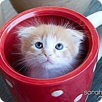 Adopt A Pet :: Theo - Irvine, CA