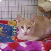 Adopt A Pet :: Quidditch - Scottsdale, AZ