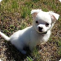 Adopt A Pet :: Mavis - Staunton, VA