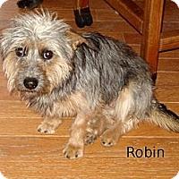 Adopt A Pet :: Robin - Franklinton, NC