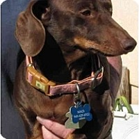 Adopt A Pet :: Darby - Garden Grove, CA