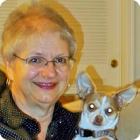 Adopt A Pet :: Mac - Plain City, OH